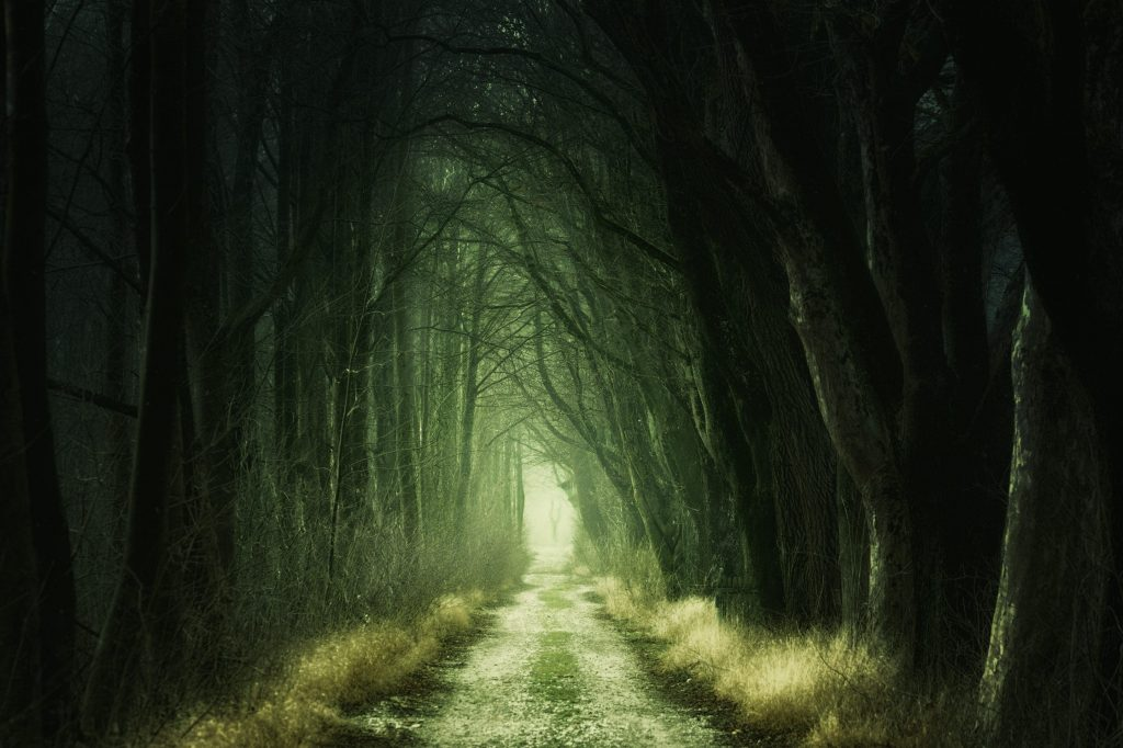 Dark forest path leading to light